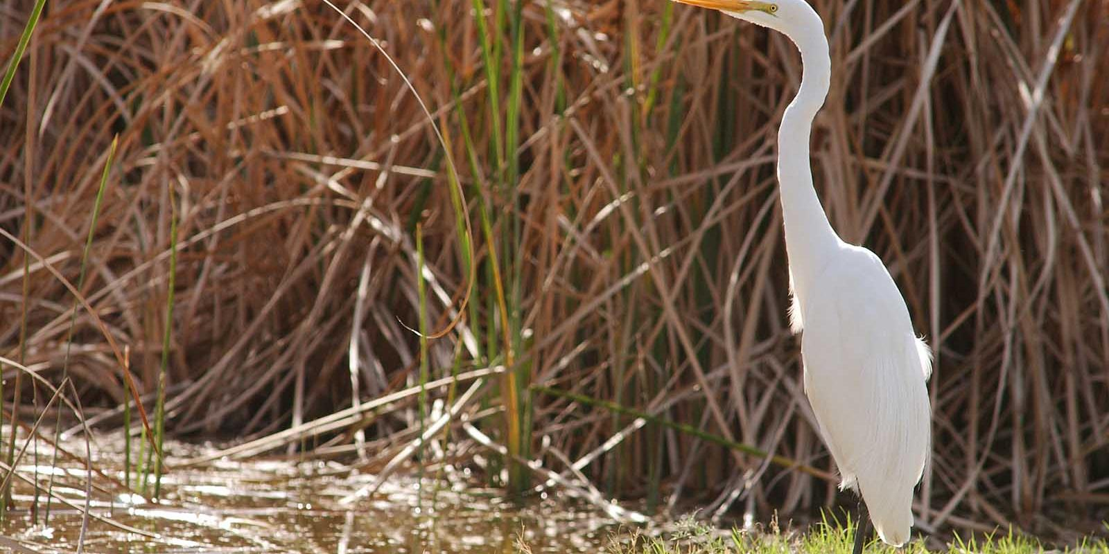 A heron visits the wildlife preserve at the Lyle Center