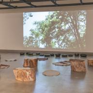 Tree Ring series