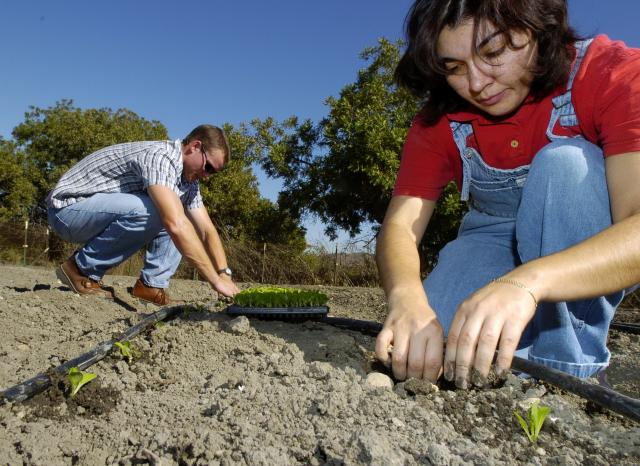 Landscape architecture students plant vegetables in a plot at the Lyle Center as part of their Horticulture 131 class