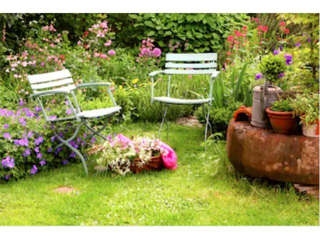 A small backyard garden with wildflowers (Shutterstock)